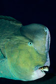 FSH 01 WF0024 01
