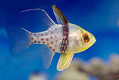 FSH 01 WF0032 01