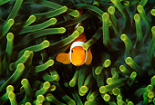FSH 01 JM0025 01