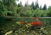 FSH 01 JM0031 01