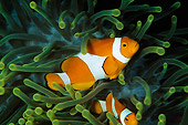 FSH 01 JM0041 01