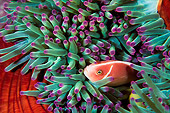 FSH 01 JM0044 01