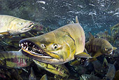 FSH 01 JM0045 01