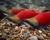 FSH 01 RD0006 01