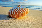 FSH 02 MH0003 01