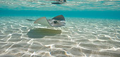 FSH 03 KH0004 01