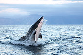 FSH 04 GL0001 01