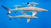 FSH 04 KH0007 01