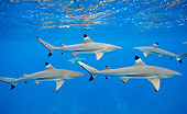 FSH 04 KH0008 01