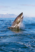 FSH 04 KH0016 01