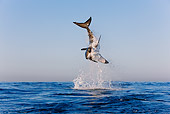 FSH 04 KH0018 01