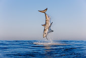 FSH 04 KH0019 01