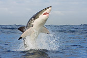 FSH 04 KH0022 01