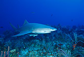 FSH 04 JM0005 01