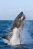 FSH 04 KH0002 01