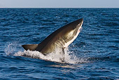 FSH 04 KH0003 01
