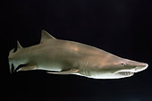 FSH 04 TL0001 01