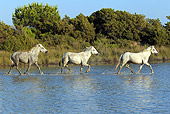 HOR 01 AC0002 01