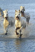 HOR 01 AC0006 01