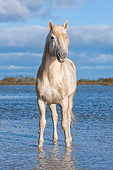 HOR 01 AC0032 01