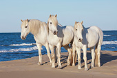 HOR 01 AC0034 01