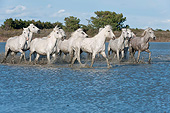 HOR 01 AC0035 01