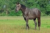 HOR 01 AC0037 01