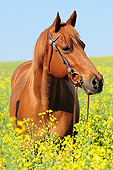HOR 01 AC0040 01