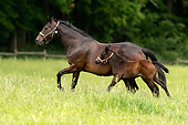 HOR 01 AC0043 01