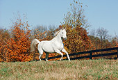 HOR 01 FA0011 01