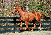 HOR 01 FA0012 01