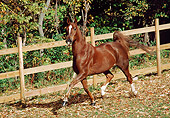 HOR 01 FA0014 01