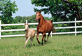 HOR 01 FA0016 01