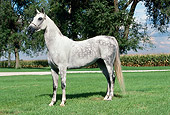 HOR 01 FA0020 01