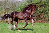 HOR 01 GL0001 01