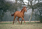 HOR 01 GL0003 01