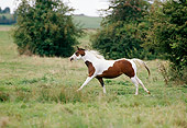 HOR 01 GL0004 01