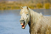 HOR 01 GL0005 01