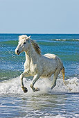 HOR 01 GL0006 01