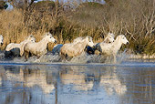 HOR 01 GL0007 01