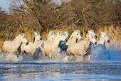 HOR 01 GL0008 01