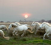 HOR 01 GL0009 01