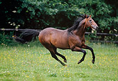 HOR 01 GL0012 01