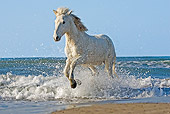 HOR 01 GL0020 01