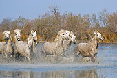 HOR 01 GL0024 01