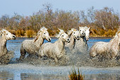 HOR 01 GL0025 01
