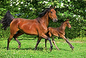 HOR 01 GL0030 01