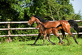 HOR 01 GL0031 01