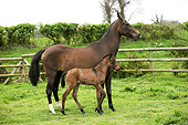 HOR 01 GL0034 01