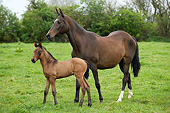 HOR 01 GL0035 01
